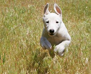 Running dog having fun