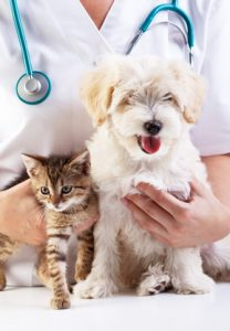 Vet with kitten and puppy