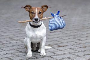 hobo dog