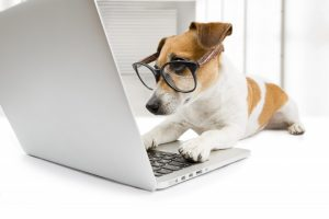 Clever-looking dog at a computer